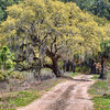 Botany Bay Plantation / Edisto Beach SC : Photos taken during visits in April 2010 & 2014